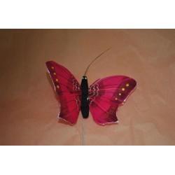 papillon-fuchsia-sur-pic