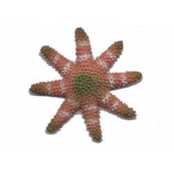 etoile-de-mer-en-caoutchouc-rose-vert-blanche