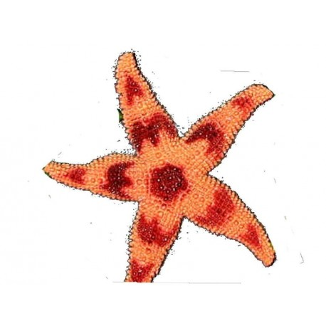 etoile-de-mer-en-caoutchouc-orange-et-marron