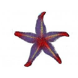 etoile-de-mer-en-caoutchouc-violette-rouge-et-jaune