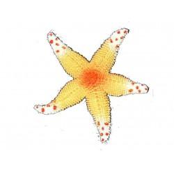 etoile-de-mer-en-caoutchouc-jaune-orange-blanche