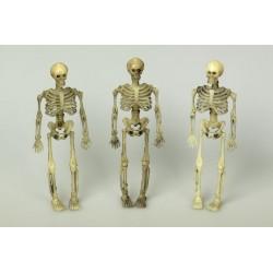3 squelettes en plastique 14.5 cm