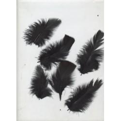 sachet-d-environ-25-plumes-noires-plumes-veritables