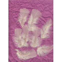 sachet-d-environ-25-de-plumes-ivoire-plumes-veritables