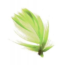 sachet-de-60-plumes-vert-anis-plumes-veritables