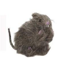 rat-peluche-pelage-tout-decoiffe-gris-beige-rat-poil-hirsute
