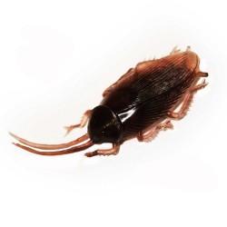 3-blattes-en-plastique-gros-cafards-marron