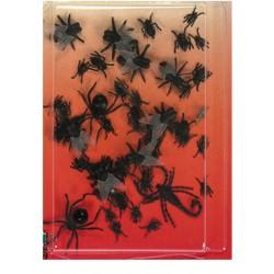 melange-d-insectes-assortis-mouche-scorpion-araignee-etc-