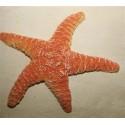 Grande Etoile de Mer Orange